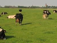 Speerpunt Boeren in de veenweiden