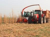 Miscanthus oogst op veengrond