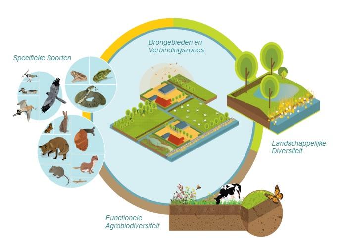 Conceptueel kader Biodiversiteit