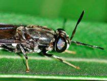 Insecten als Waardemakers
